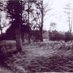 Looking Towards the Front Entrance, with the Daffodils along the Drive
